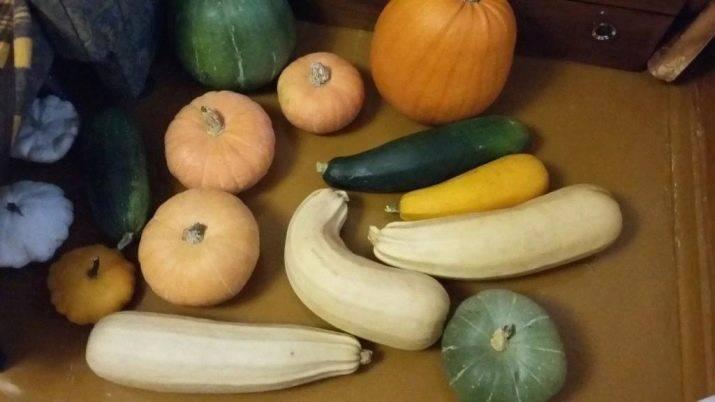 """Как отличить кабачок от тыквы по плодам? - журнал """"совхозик"""""""