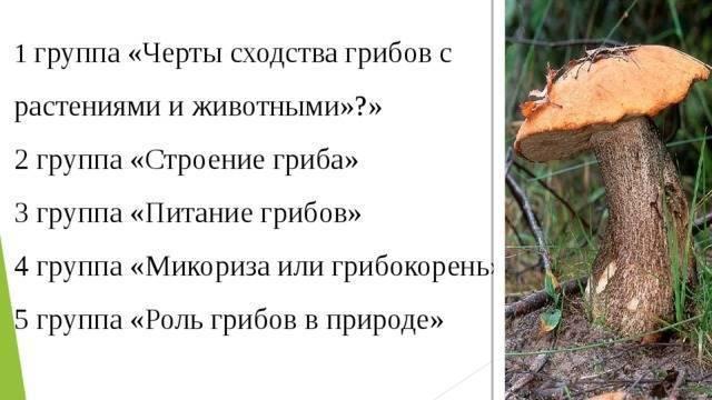 Реферат - значение грибов в природе и жизни человека.
