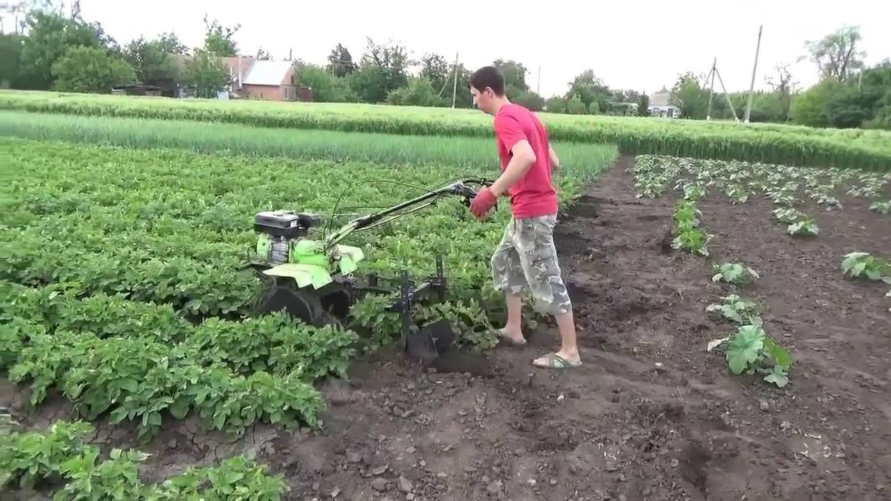 Окучивание картофеля: что это за процедура, когда и как часто она проводиться, каковы самые эффективные способы ухода за урожаем? русский фермер