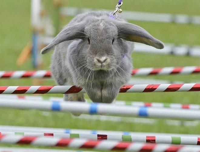 Интересные факты о домашних кроликах. интересные факты о кроликах.
