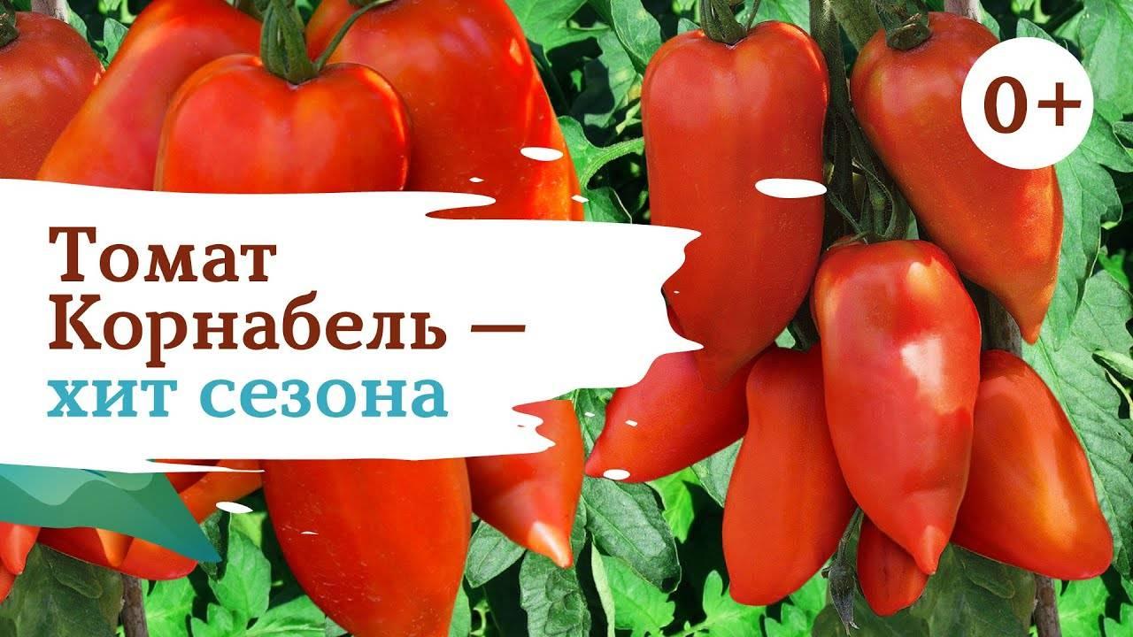 Сорт томата корнабель (f1): фото, отзывы, описание, характеристики