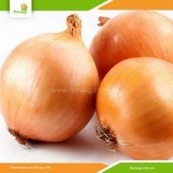 Лук стурон: описание сорта, советы по выращиванию