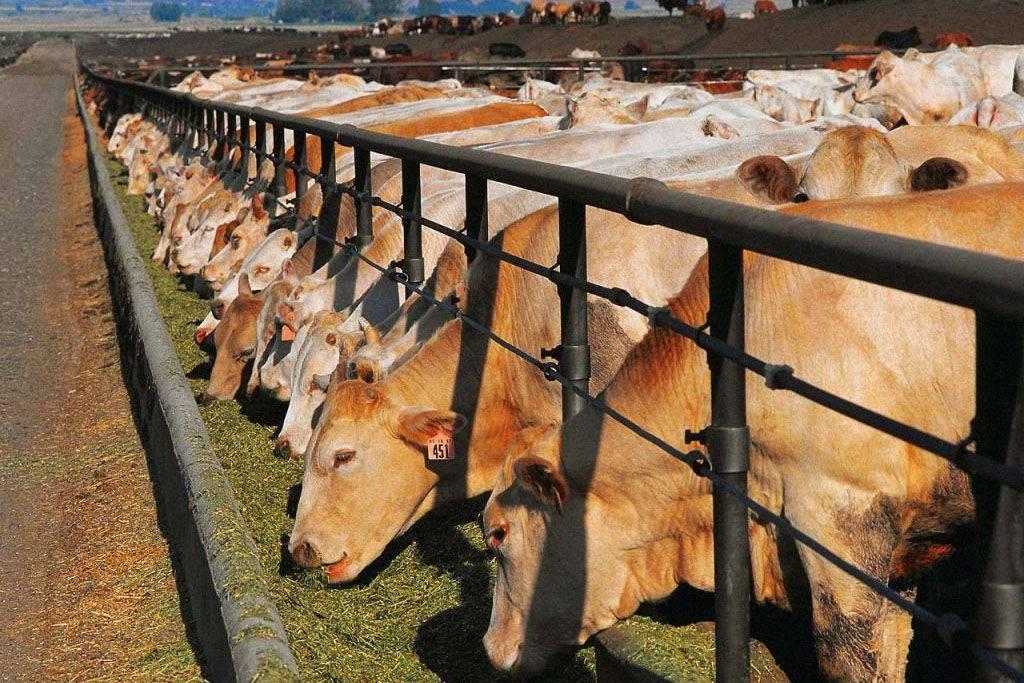 Комбикорм для крс: состав комбикорма для дойных коров и телят. сколько комбикорма нужно корове в день? с какого возраста можно его давать? рецепты