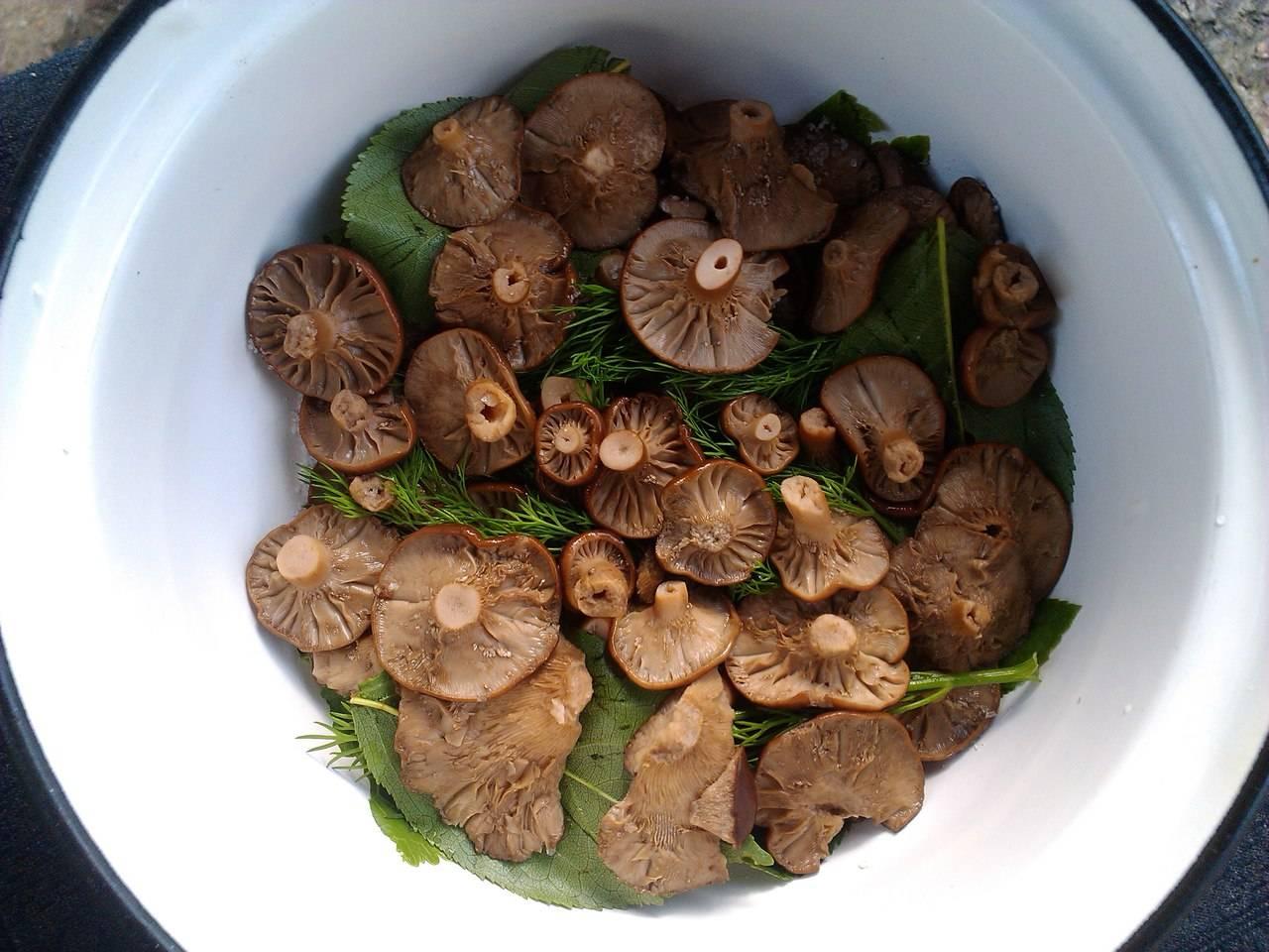 Опасен ли ложный белый гриб?