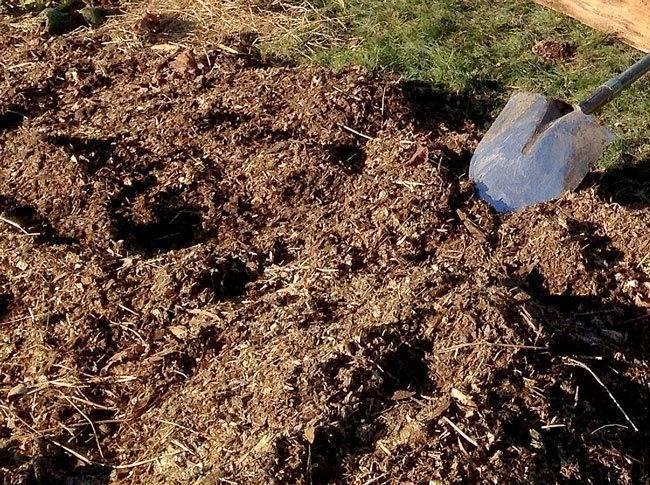 Куриный помет как удобрение для помидоров и огурцов: подкормка в теплице, как приготовить, как разводить