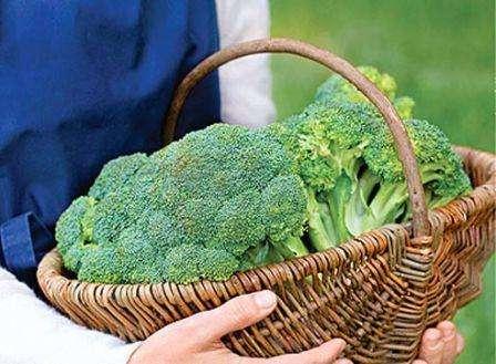 Брокколи: выращивание и уход в открытом грунте и в теплице