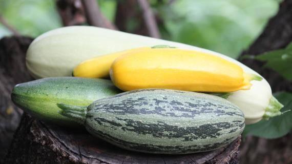 Как часто и правильно поливать кабачки в открытом грунте - всё про сады