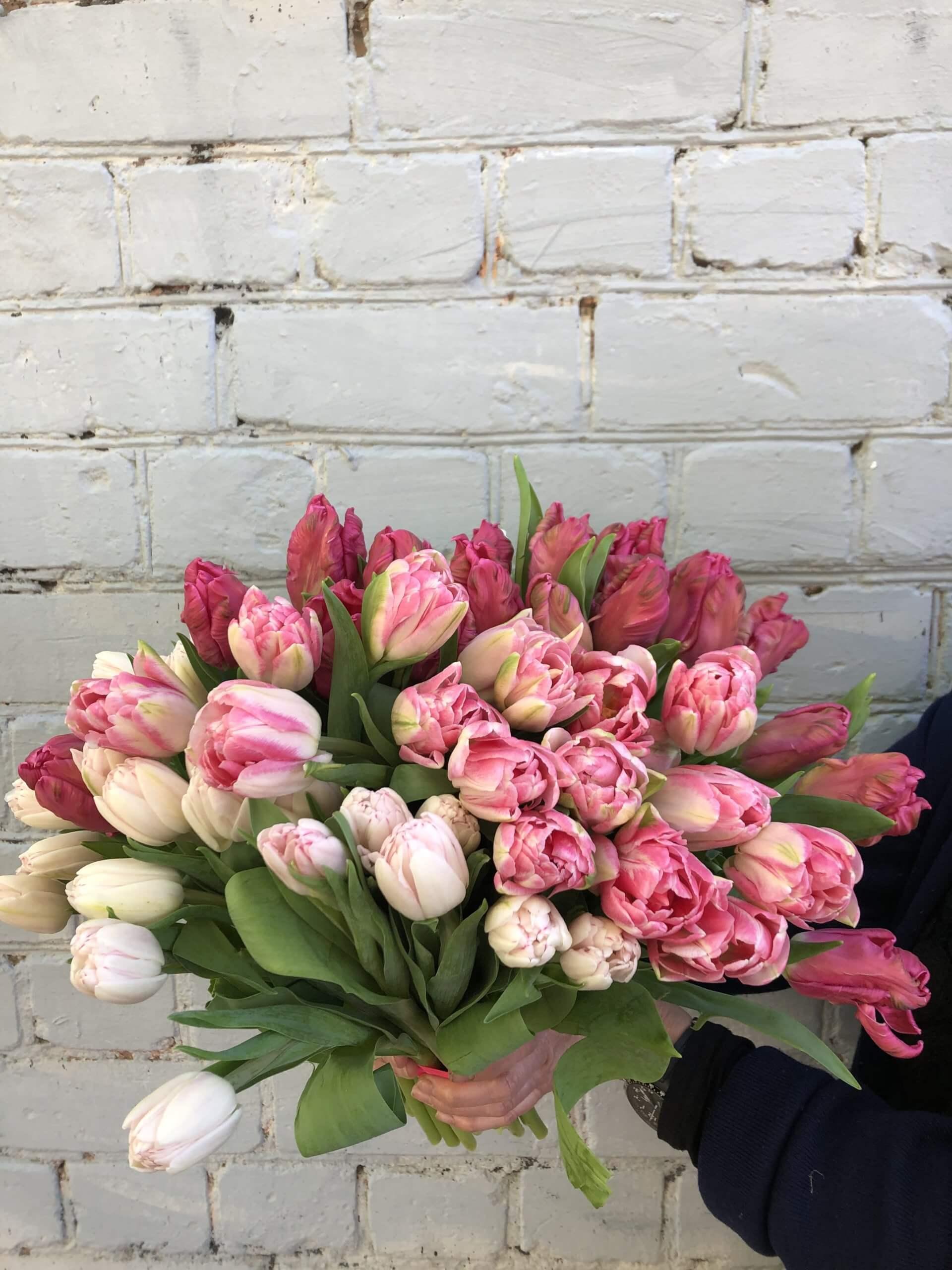 Тюльпаны махровые пионовидные: описание и характеристика