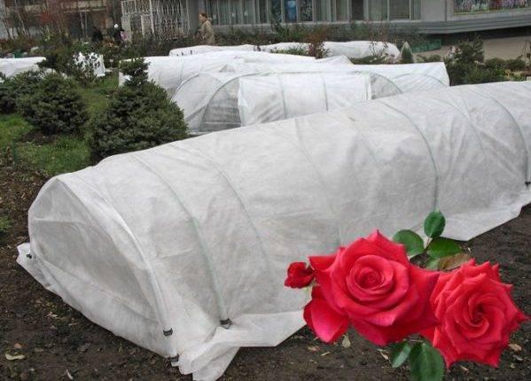Как укрывать розы на зиму в сибири: обрезка, подготовка и варианты утепления
