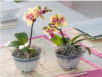Уход за орхидей во время цветения в домашних условиях, чем подкармливать в зимнее время, можно ли поворачивать, советы на видео, как правильно ухаживать