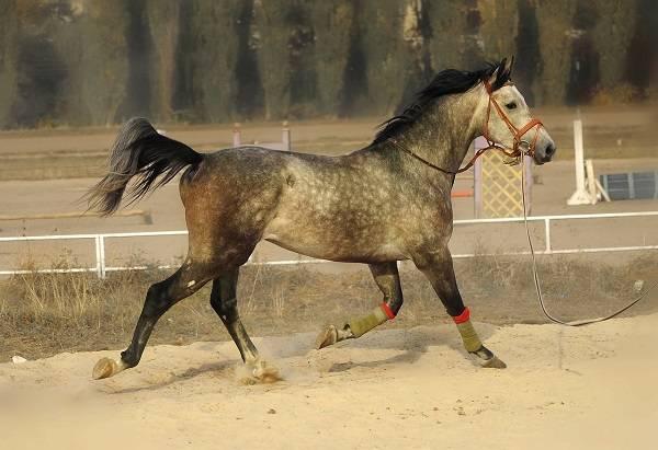 Сонник лошадь. к чему снится лошадь во сне женщине и мужчине