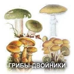 Самые коварные грибы двойники: список, описание, названия, фото и видео  - «как и почему»
