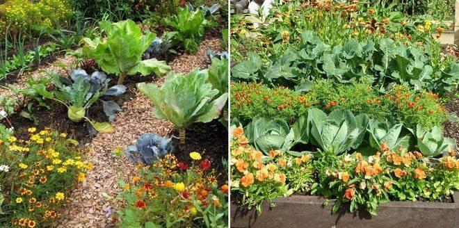 Соседство и чередование овощей