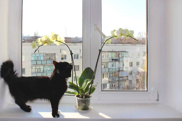 Как заставить цвести орхидею повторно, если она долго этого не делает: почему растение «ленится» и какие есть 9 правил для домашних условий, чтобы его стимулировать? selo.guru — интернет портал о сельском хозяйстве