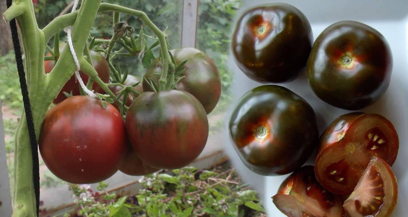 Томат черный принц: описание, отзывы, фото, урожайность | tomatland.ru