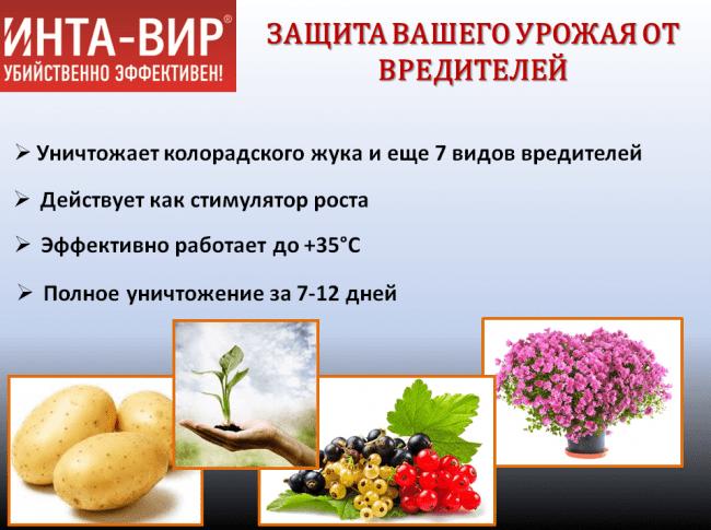 Применение интавира: особенности, правила обработки, когда можно снимать плоды