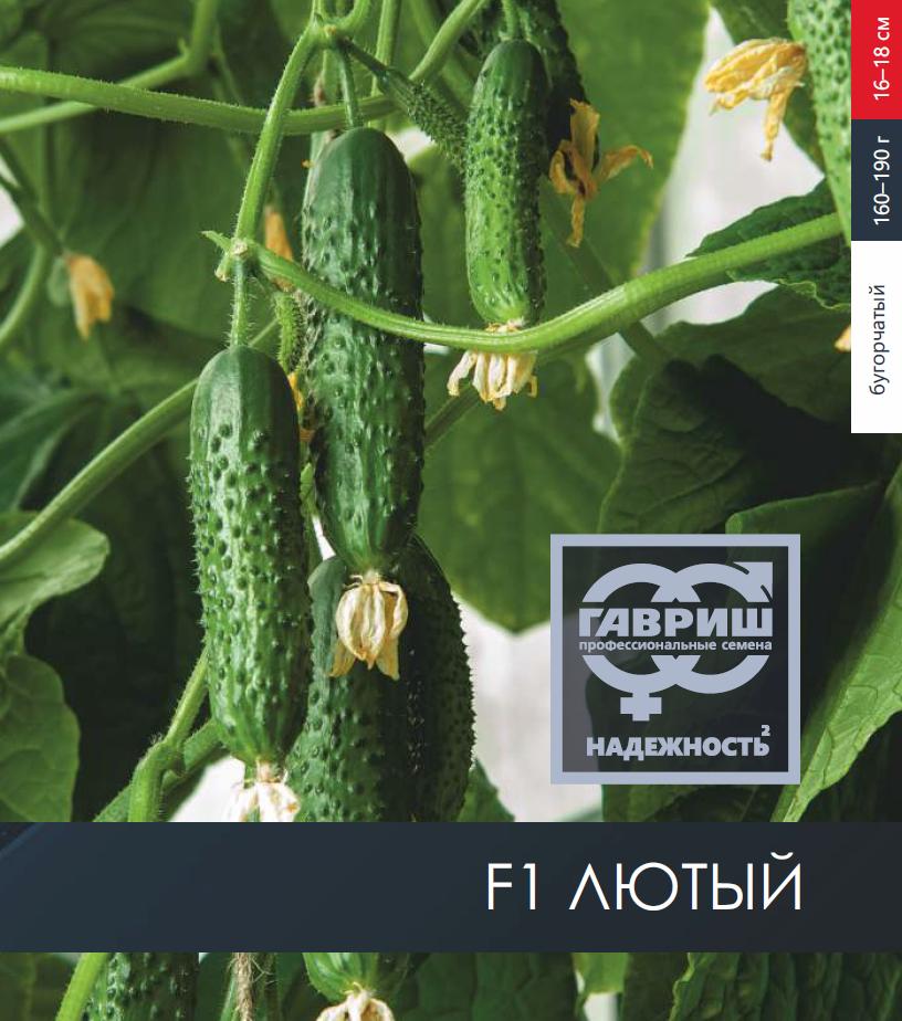 Огурец хрустящий аллигатор f1: отзывы, характеристика и описание сорта, фото