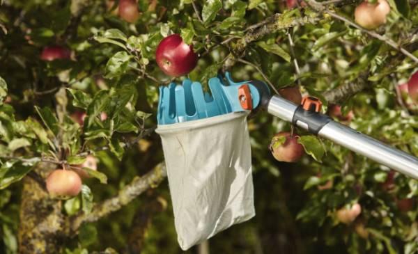 Приспособление для сбора яблок – выбираем удобную конструкцию + видео