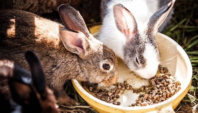 Витаминное подкрепление: какие продукты необходимы для здоровья весной | статьи | известия
