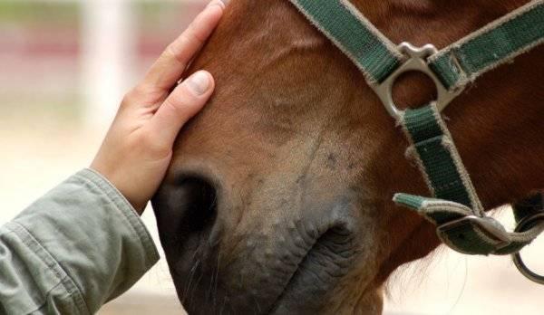 Основные моменты о беременности у лошадей