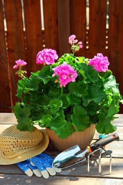 Как и когда можно пересаживать комнатные цветы?