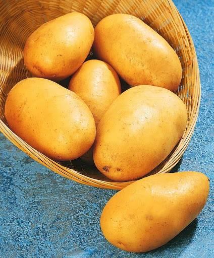 Картофель зекура: описание сорта, фото, отзывы овощеводов, особенности агротехники, урожайность