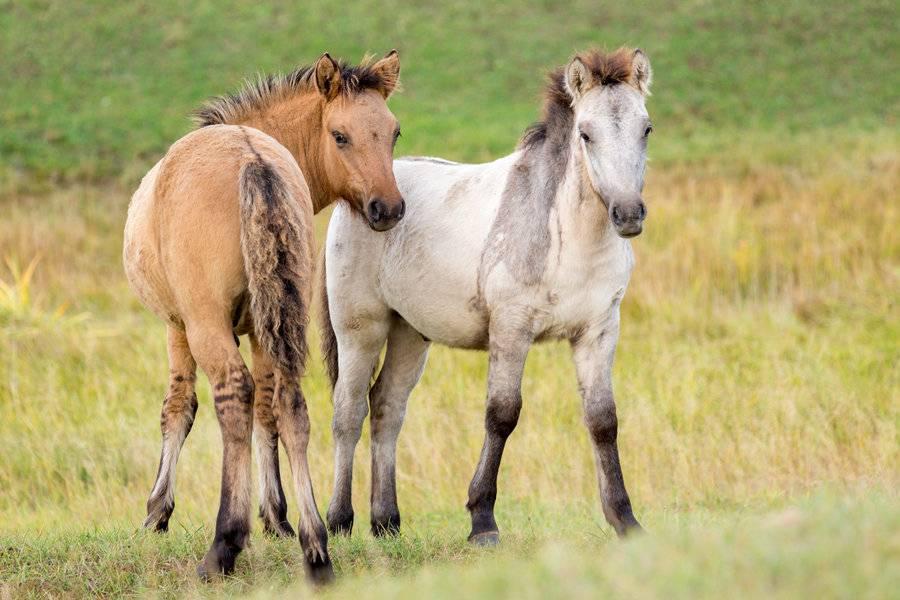 Жизненный цикл лошади: от рождения до старости
