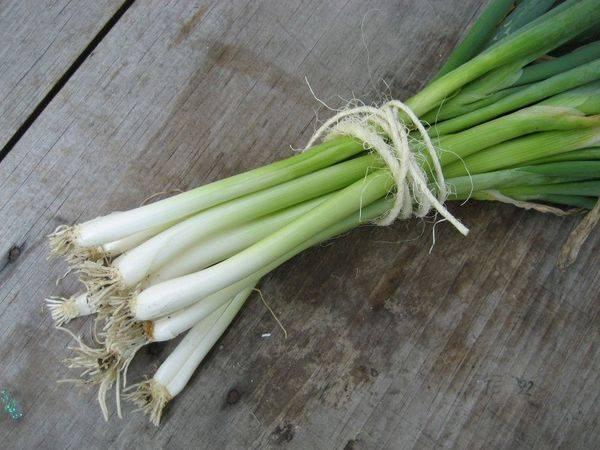 Многолетний лук: сорта, выращивание и уход, фото