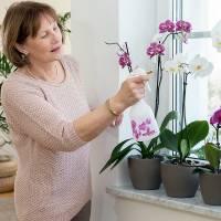 Корневая гниль на орхидее – все причины возникновения