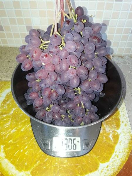Виноград велес: описание сорта, особенности выращивания