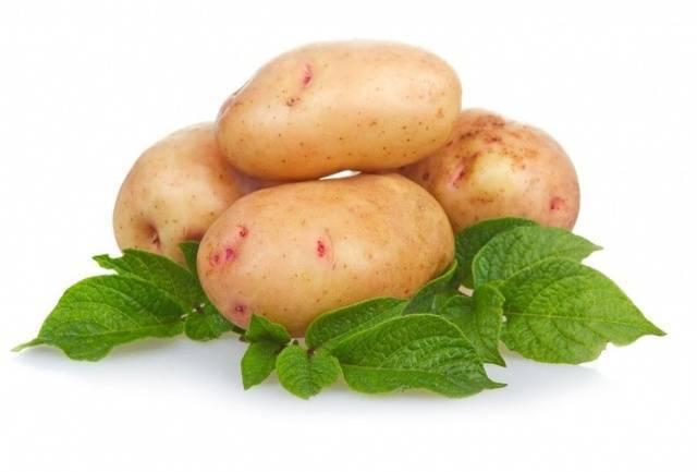 Голландский сорт картофеля — агата. описание и фото, особенности выращивания и ухода