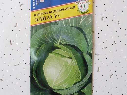 Описание капусты теща - дневник садовода semena-zdes.ru