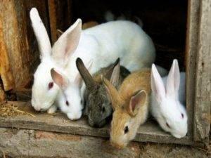 Разведение кроликов как выгодный бизнес
