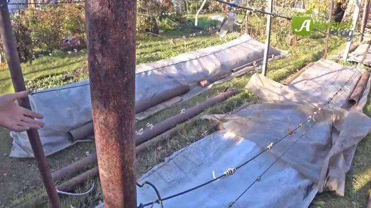 Как укрыть виноград в зиму в сибири: правила и способы, видео, фото