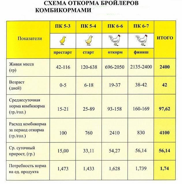 Температурный режим для бройлеров в зависимости от возраста