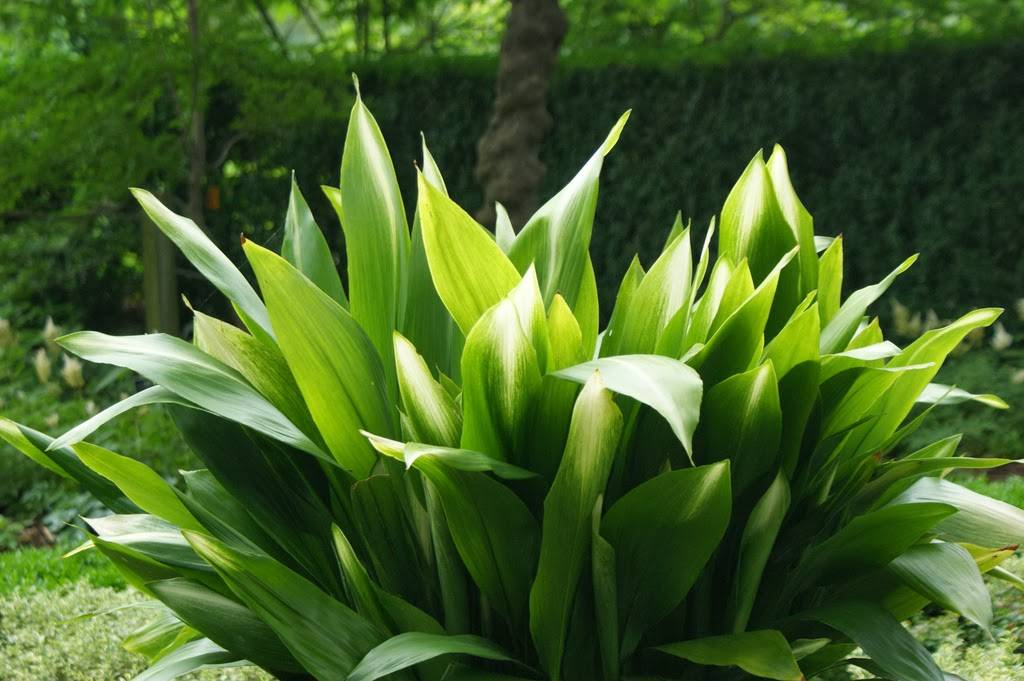 Неприхотливые комнатные растения, цветущие круглый год