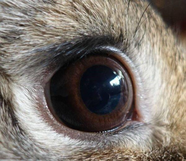 Аллергия на глазах – причины и симптомы аллергического конъюнктивита