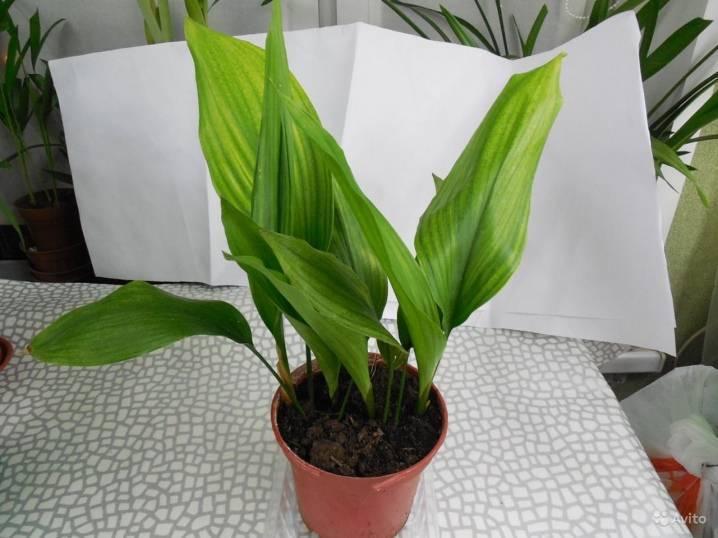 Комнатные растения для офиса: правила выбора и примеры