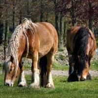 Болезни лошадей: симптомы и лечение, причины заболеваний
