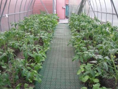 Подкормка помидор в теплице, какие удобрения и когда использовать