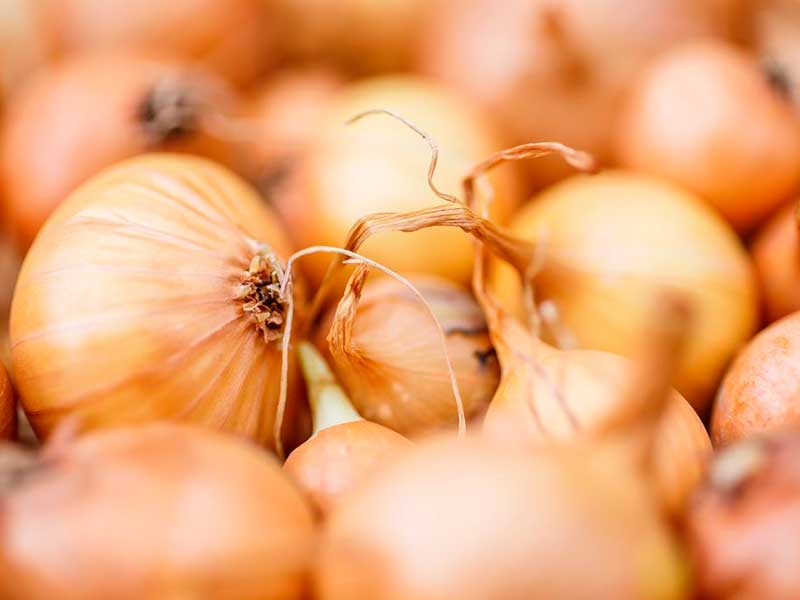 Лук штутгартер: описание сорта, посадка и уход, подкормки, сбор урожая