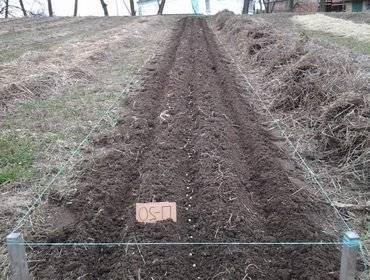 Сроки и правила посадки огурцов в открытый грунт, уход после