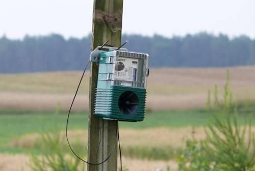 Отпугиватель голубей: зачем нужен и как работает?