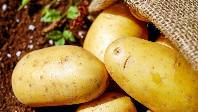 Польза и вред картофеля в сыром, запеченном и вареном виде, фото