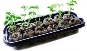 Выращивание рассады перца в торфяных таблетках: фото, описание