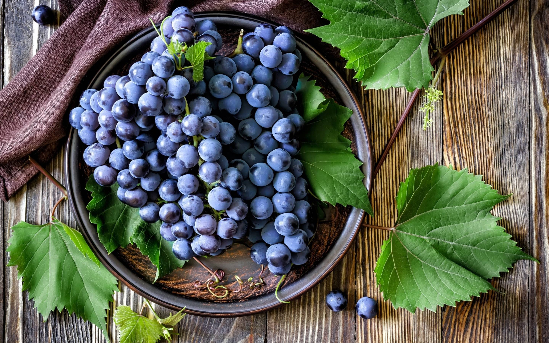 Листовертка гроздевая