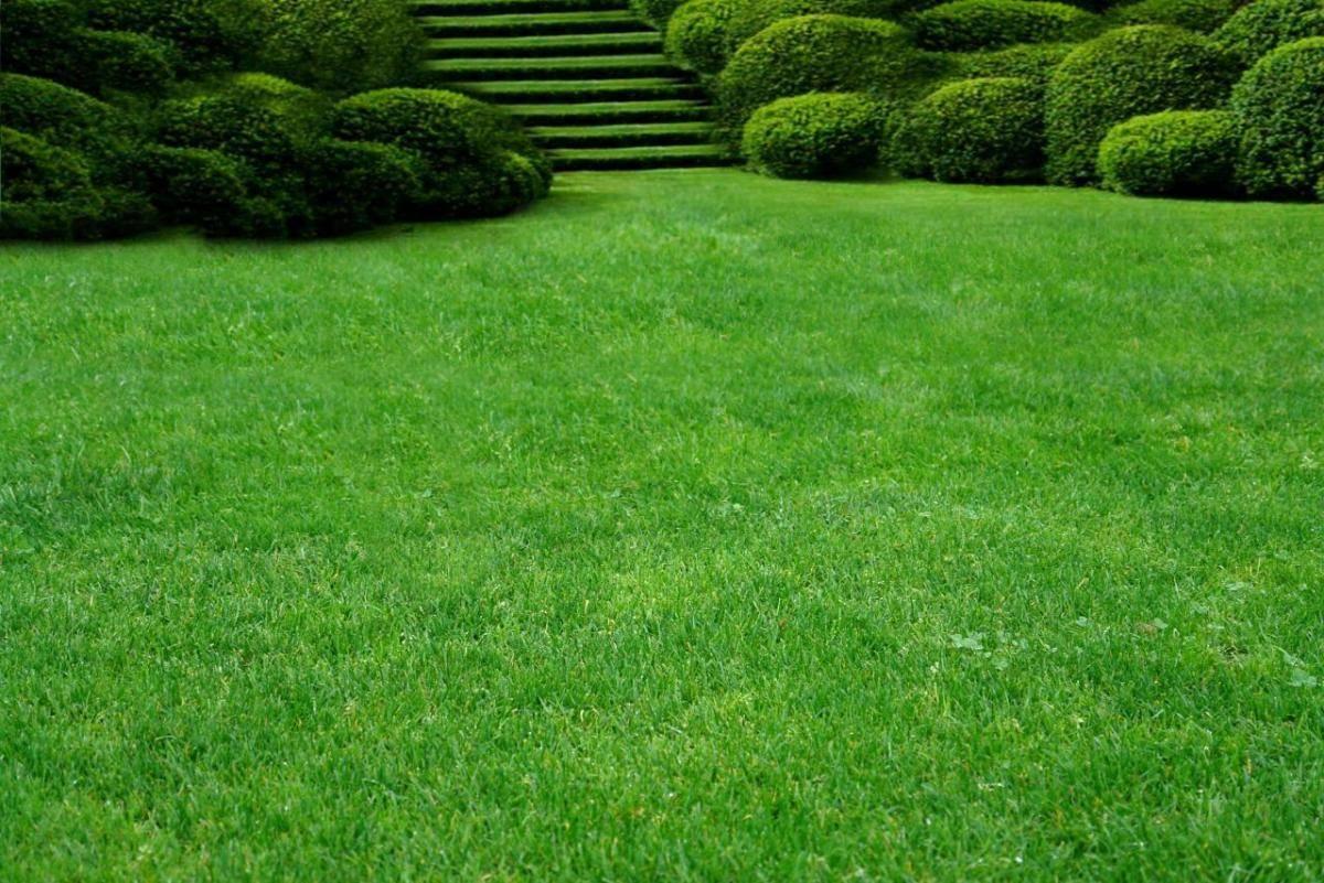 Как сделать газон своими руками: пошаговая инструкция