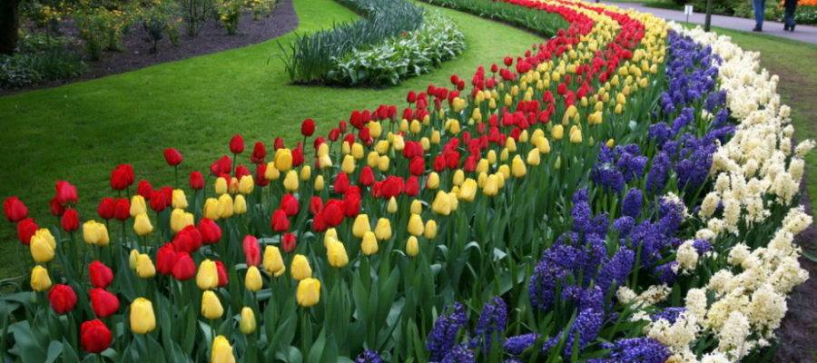 Рабатка: стильные решения при оформлении сада, участка или придомовой территории