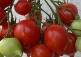 Томат буденовка - описание сорта, характеристика, урожайность, отзывы, фото