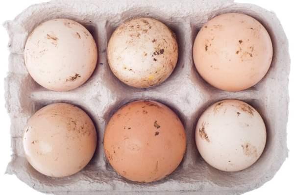 Тонкая скорлупа у куриных яиц и другие проблемы яйцекладки